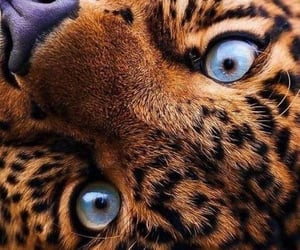 animal, eyes, and beautiful image