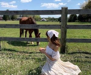 farm, horse, and nature image