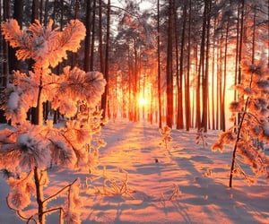 forest, snow, and sunset image