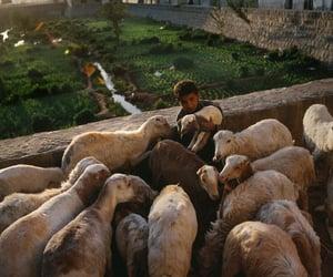 photograph, boy, and sheep image