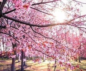 finland, flower, and sakura image