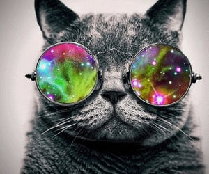 cat, cool, and galaxy image