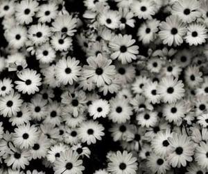 aesthetics, background, and black and white image