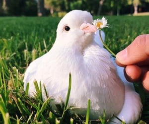bird, flowers, and animal image