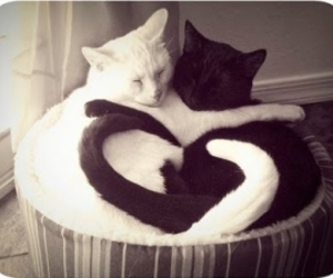 black, heart, and cats image