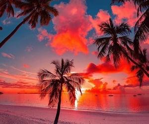 beach, daydream, and palms image