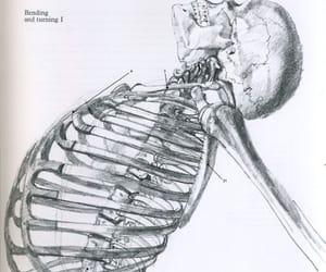 anatomy, artwork, and bones image
