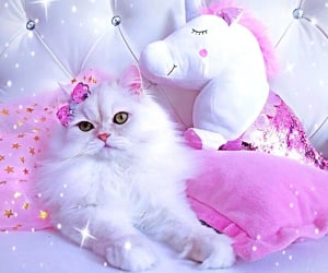 cats, girly, and cute cats image