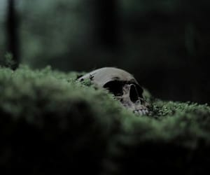 green, skull, and harry potter image