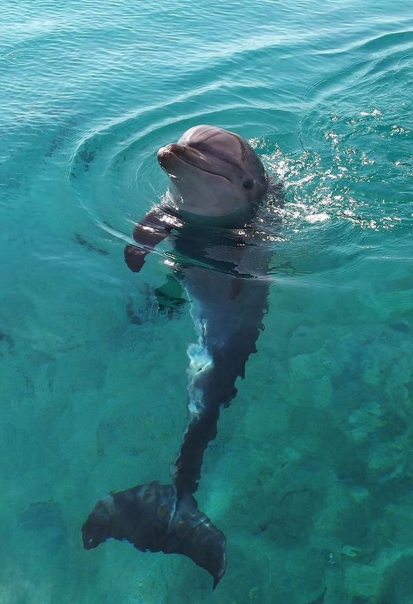 animal, dolphin, and sea image