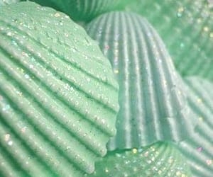 shell, aesthetic, and green image