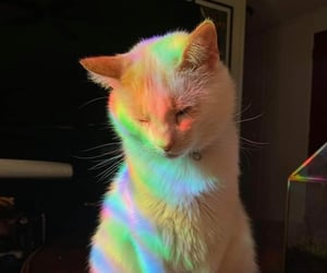 cat, aesthetic, and Animais image