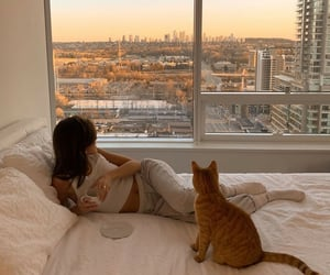 cat, city, and view image