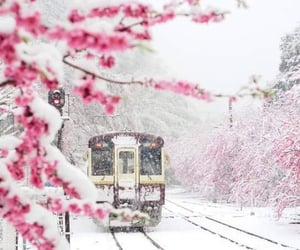 aesthetic, winter, and flowers image