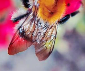 aesthetics, animals, and macro photography image