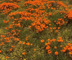 field, flowers, and orange image