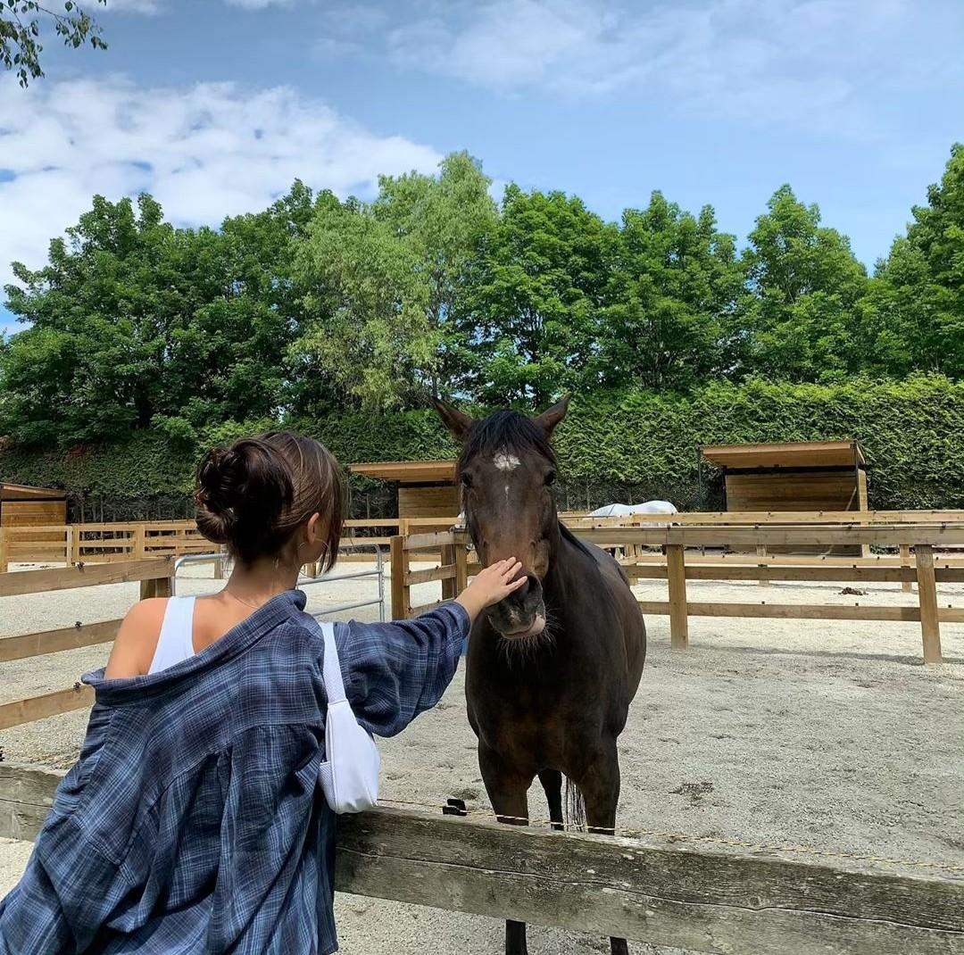animals, farm, and fashion image