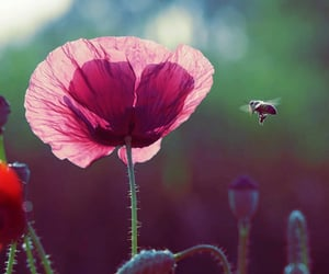 aesthetics, bee, and flowers image