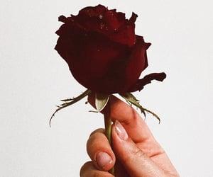 feelings, flower, and redrose image