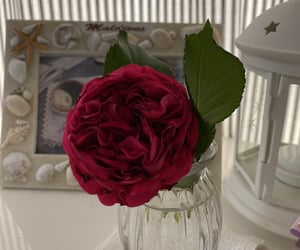 red, roses, and redo roses image
