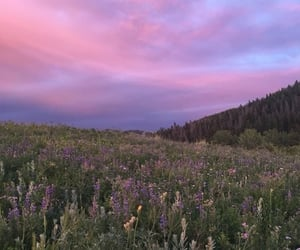 purple, nature, and pink image