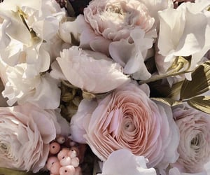 flowers, rose, and aesthetics image
