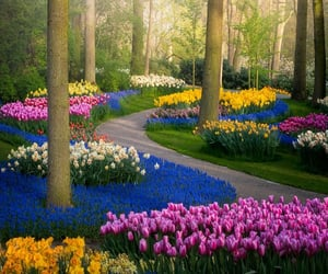 belleza, tulipanes, and flores image