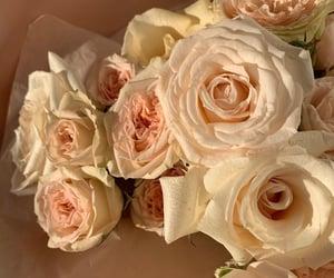 aesthetics, розы, and эстетика image