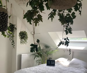 boho, decor, and plants image