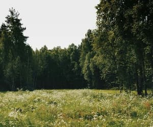 plants, forest, and green image