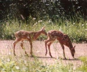 aesthetic, animals, and bambi image