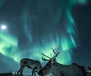adventure, amazing, and animals image