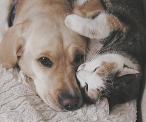 cat, dog, and kitty image