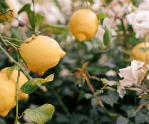 lemon, summer, and yellow image