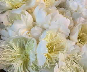 creme, peonies, and flores image