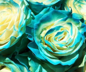 flores, flowers, and turquoise image