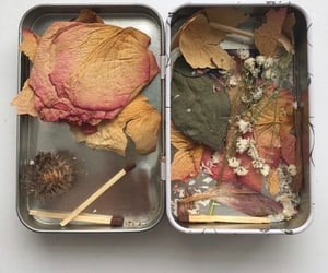 Dead Flowers and aesthetic image