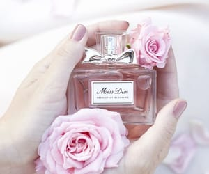 aesthetic, lifestyle, and scent image