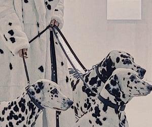 aesthetic, b&w, and dalmatian image