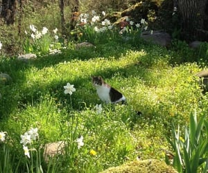 nature, aesthetic, and cat image