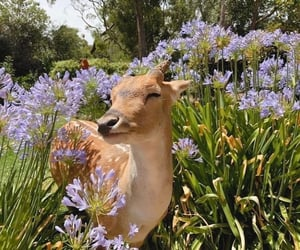 aesthetic, animal, and flowers image