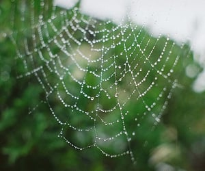 photography, spider, and web image