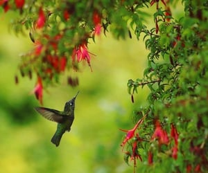 beautiful, chile, and colibri image