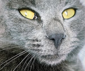 beautiful, cat, and liebling image