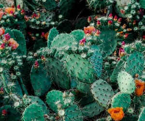 cactus, nature, and flowers image