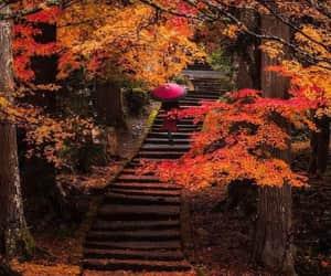 autumn, fall, and paisajes image