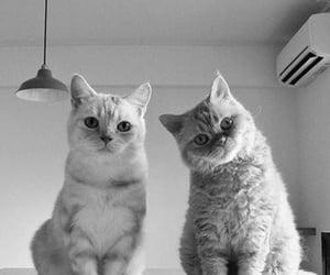 animals, cat, and cute animals image