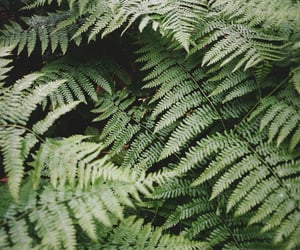 plants photography and nature ferns green image