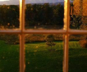 garden, golden, and light image