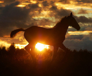 horse, foal, and sunset image